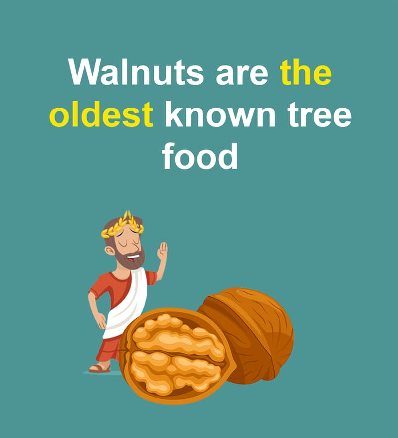 Nature Story: Walnuts are the oldest known tree food