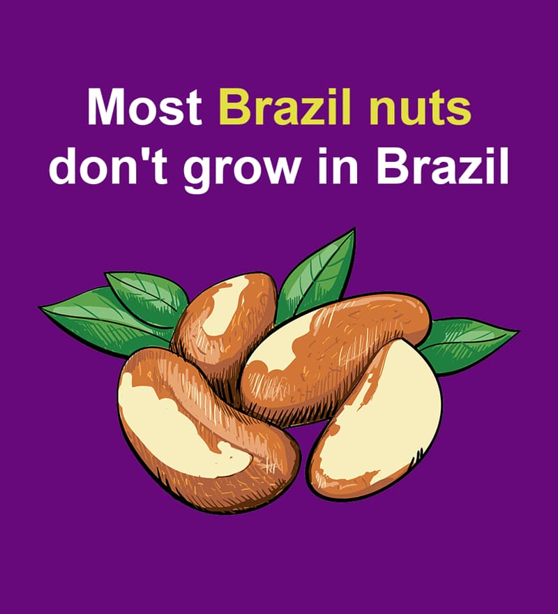 Nature Story: Most Brazil nuts don't grow in Brazil