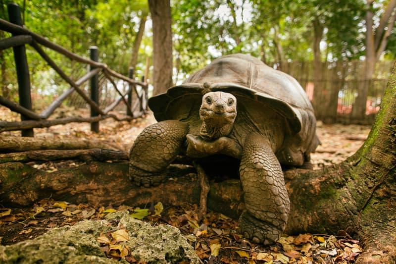 Nature Story: #5 Giant Tortoise