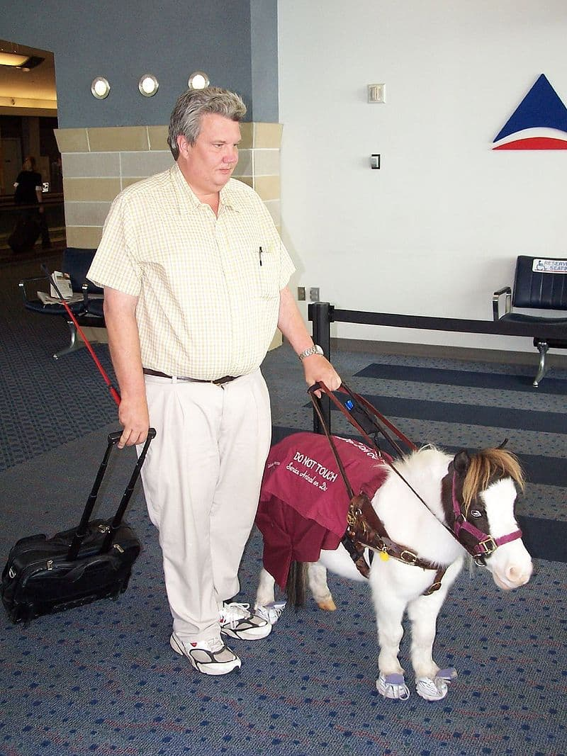Nature Story: Miniature horses are sometimes trained as service animals, just like dogs.