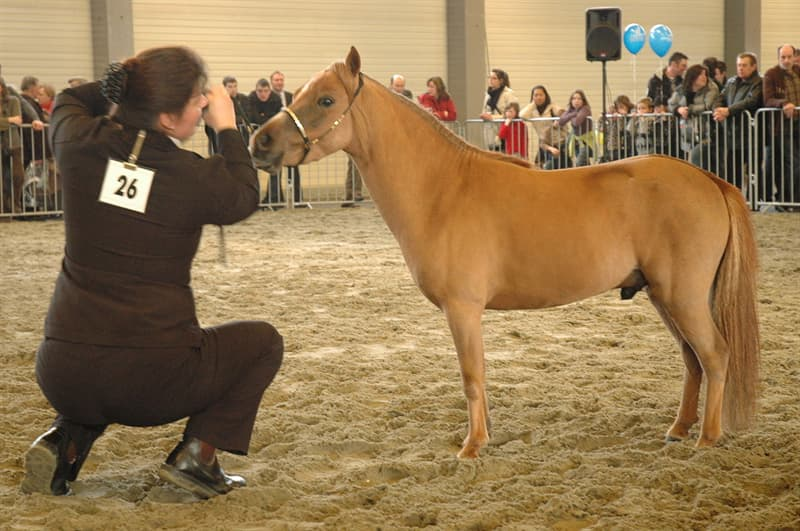 Nature Story: Most miniature horses in the world can be found in Europe and the Americas.