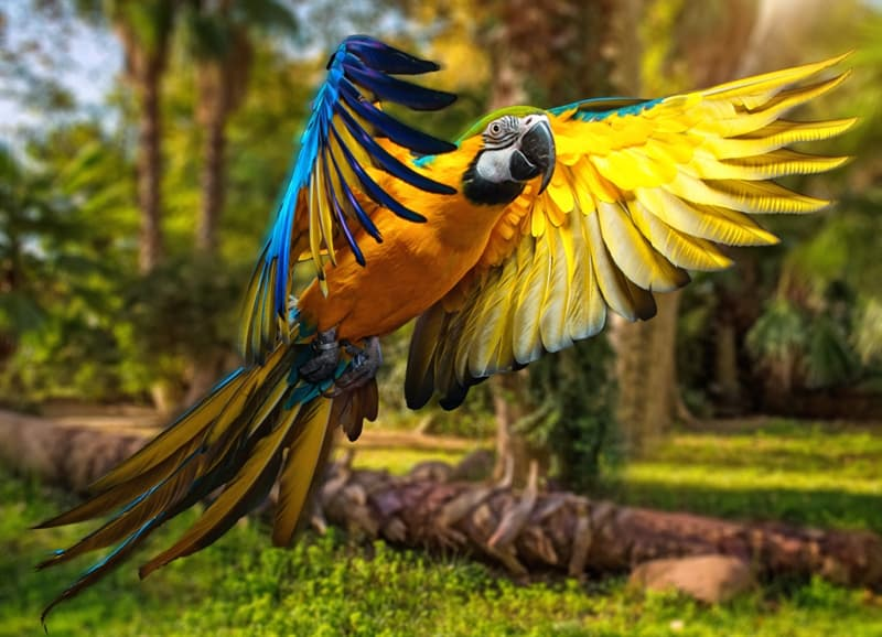 Nature Story: #4 Blue-and-yellow macaw