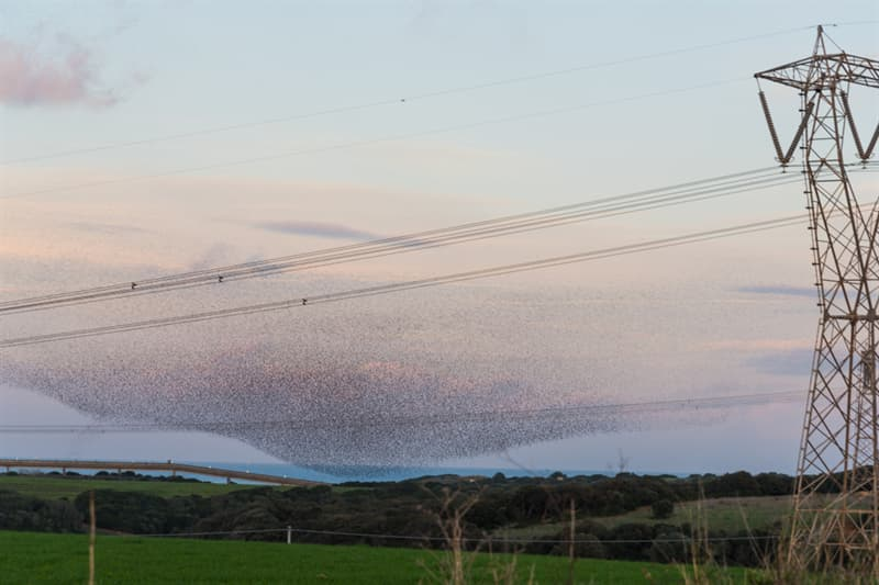 Nature Story: #6 A cloud formed by huge flocks of starlings