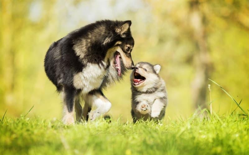 Nature Story: #14 Dog