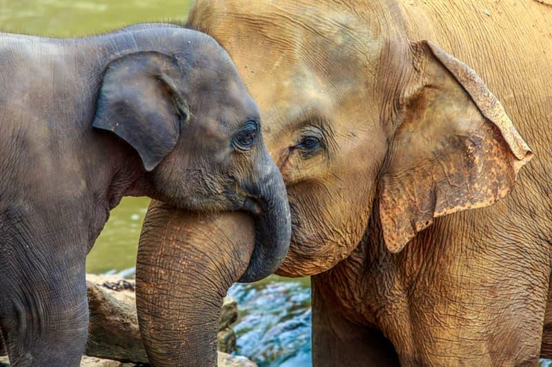 Nature Story: #3 Elephant