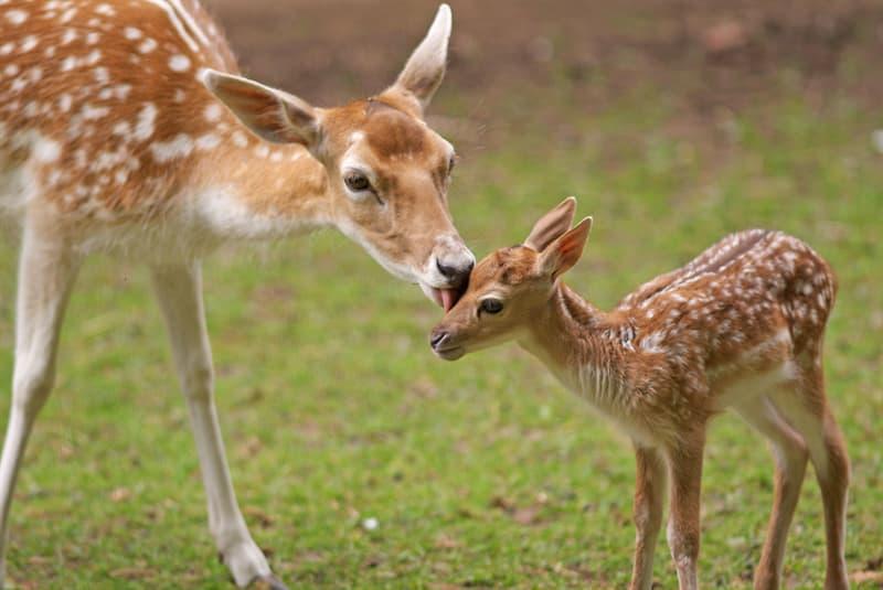 Nature Story: #4 Deer