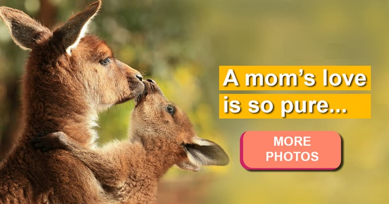 Nature Story: 16 touching pictures of animal mothers and their babies