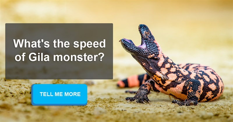 Nature Story: As slow as you can - top 7 animals who are not in a hurry
