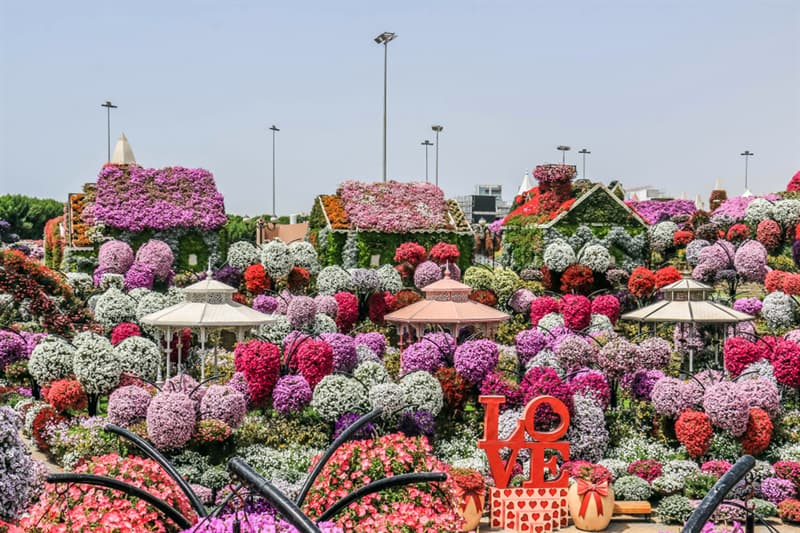 Nature Story: Dubai Natural Flower Garden: a man-made miracle #11