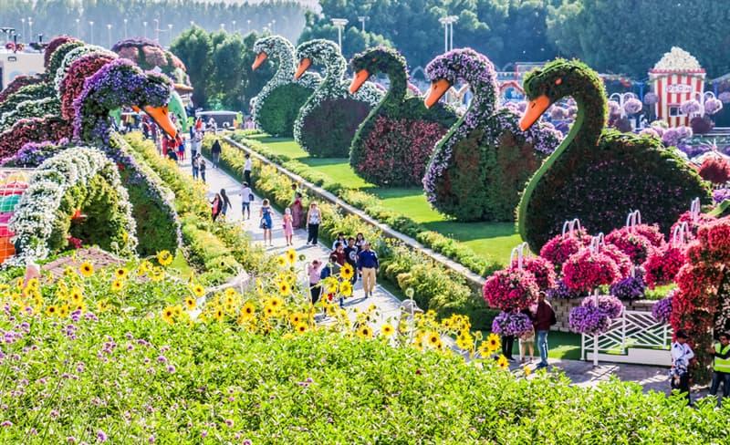 Nature Story: Dubai Natural Flower Garden: a man-made miracle #3