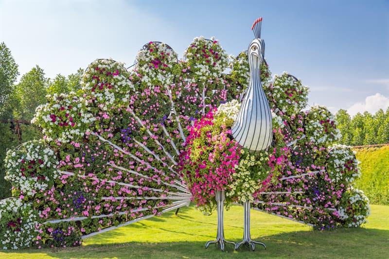 Nature Story: Dubai Natural Flower Garden: a man-made miracle #9