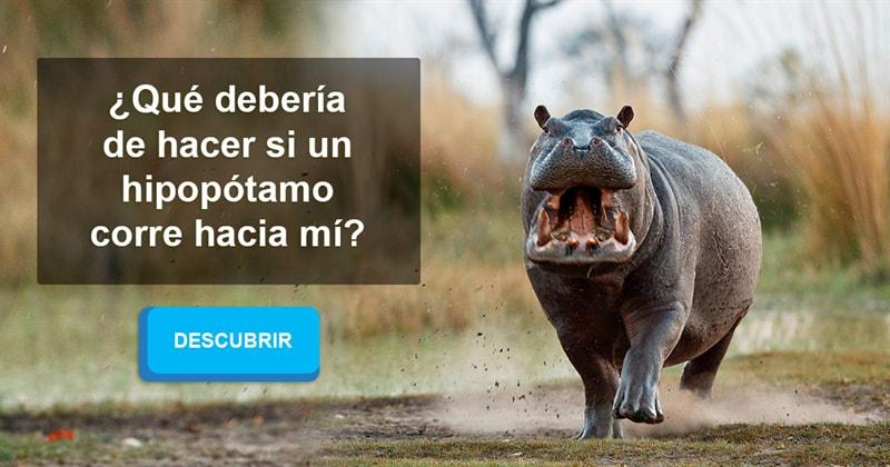 Animales Historia: ¿Qué debería de hacer si un hipopótamo corre hacia mí?