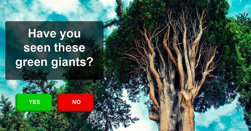Geography Story: Strangest and mysterious trees we can see on our planet