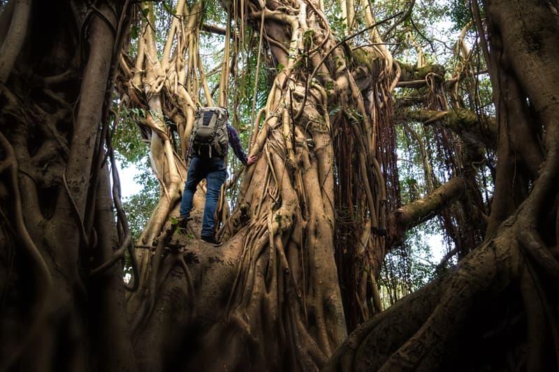 Geography Story: #1 Jungle