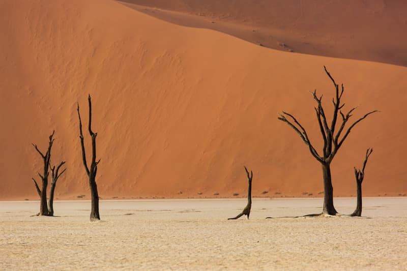 Geography Story: #12 Skeletons trees, Namibia