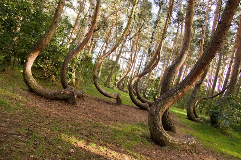 Geography Story: #6 Curved forest reserve in Poland