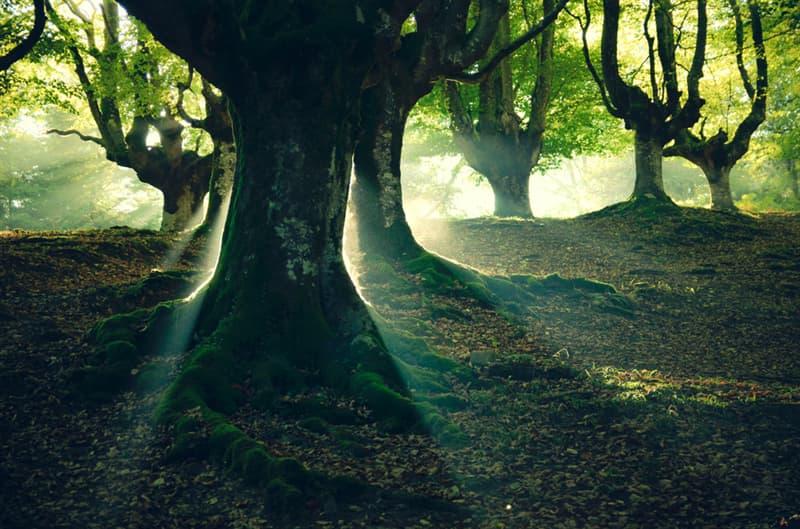 Geography Story: #8 Forest otzarreta, Basque Country