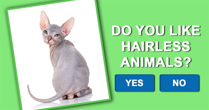 Nature Story: These 7 hairless animals prove that bald can be beautiful too