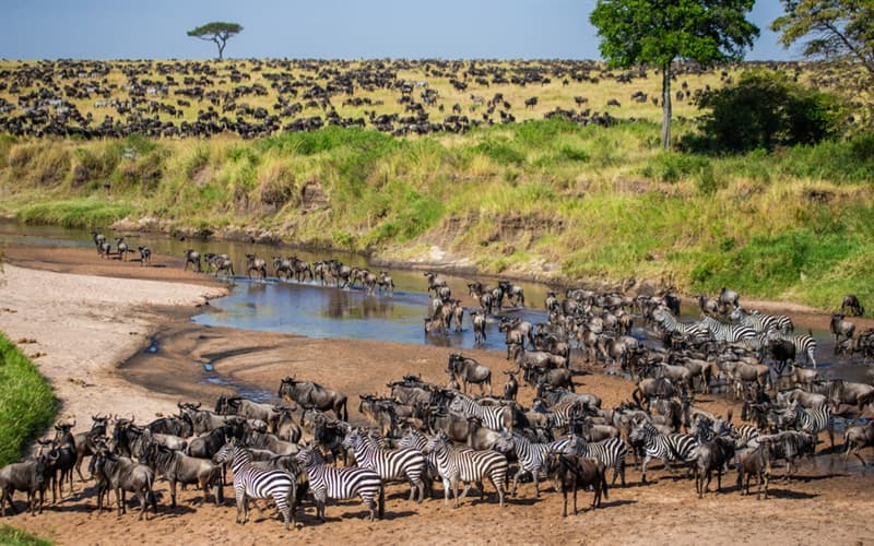 Nature Story: #2 Tanzania wild animals in the savannah crosses a small river