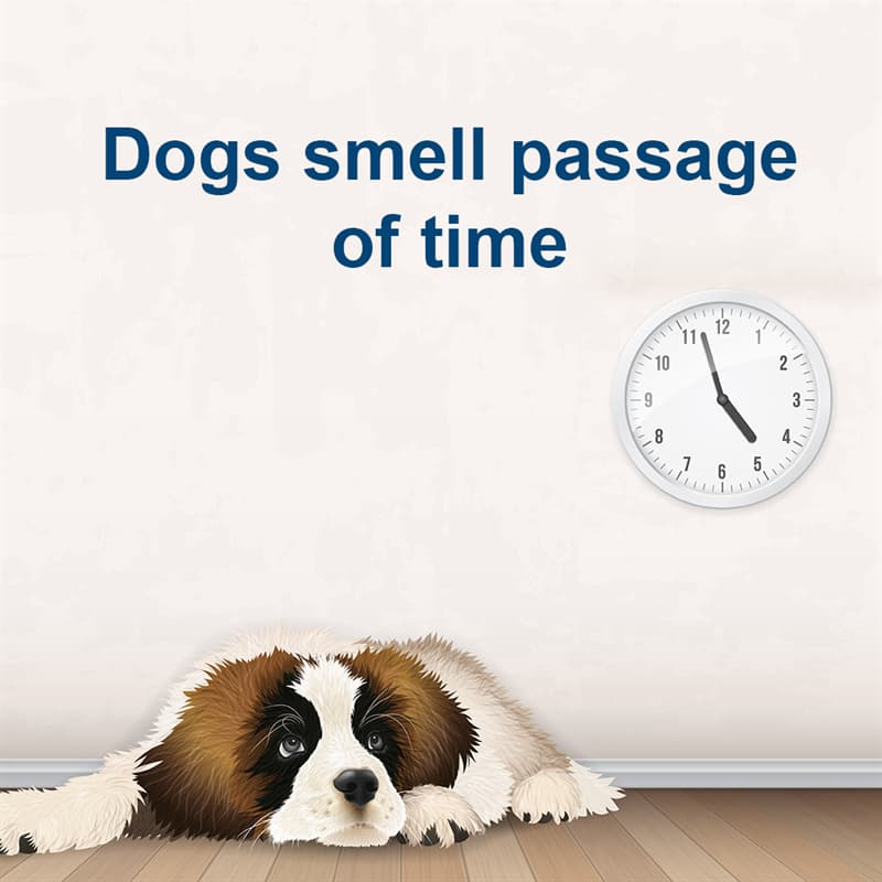 Science Story: Dogs smell passage of time