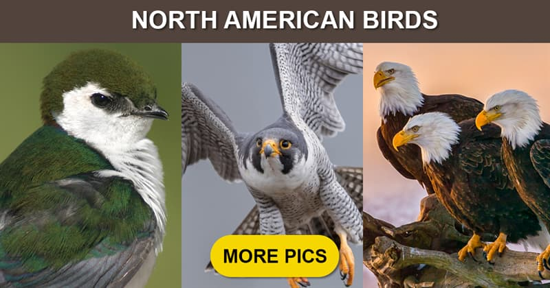 Nature Story: 10 of the most graceful birds living in North America