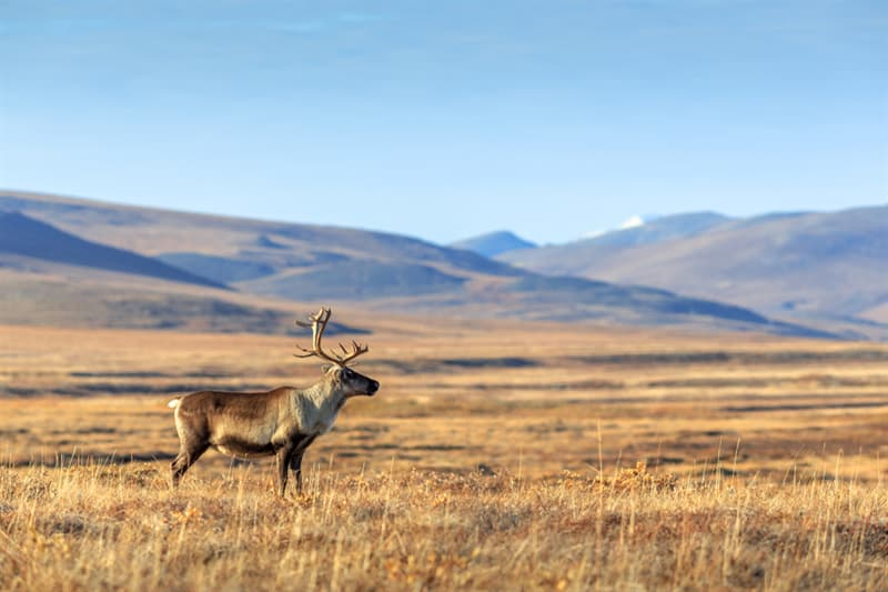Geography Story: #2 Lonely deer in the Siberian steppe