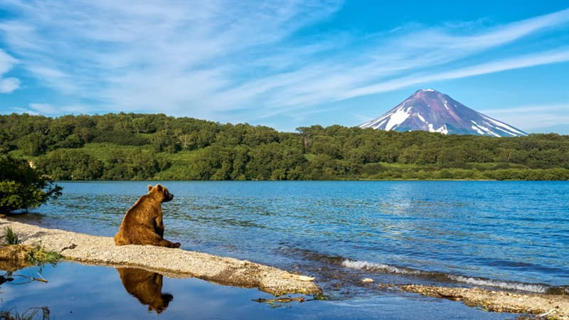 Geography Story: #5 Bear watching a smooth surface of the lake