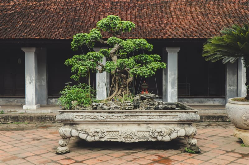 Culture Story: 'Bonsai' literally means 'tray planting'
