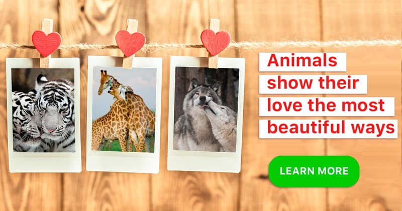 Nature Story: 10 facts about the most romantic creatures of the animal kingdom