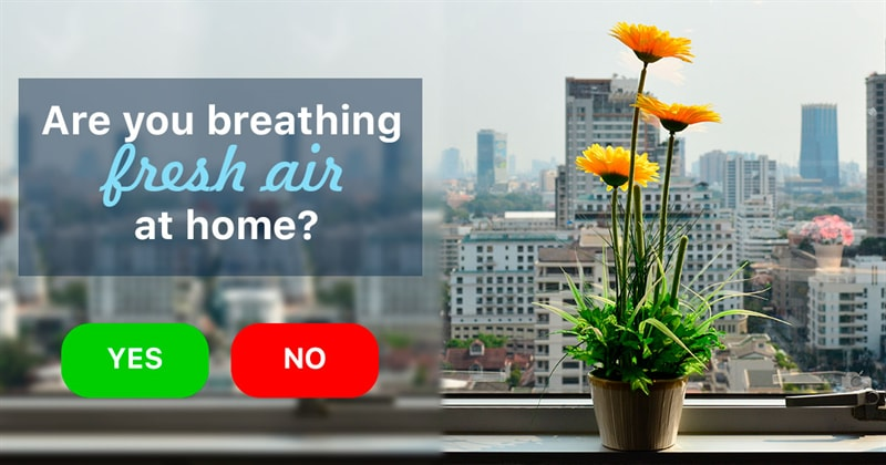 Society Story: 8 flowers which make the air in your house clean