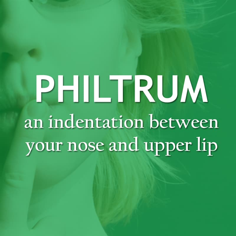 Culture Story: An indentation between your nose and upper lip - philtrum