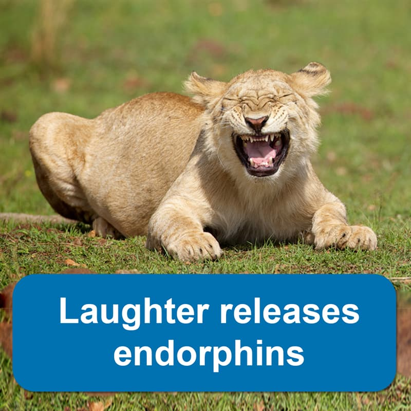 Science Story: Laughter releases endorphins