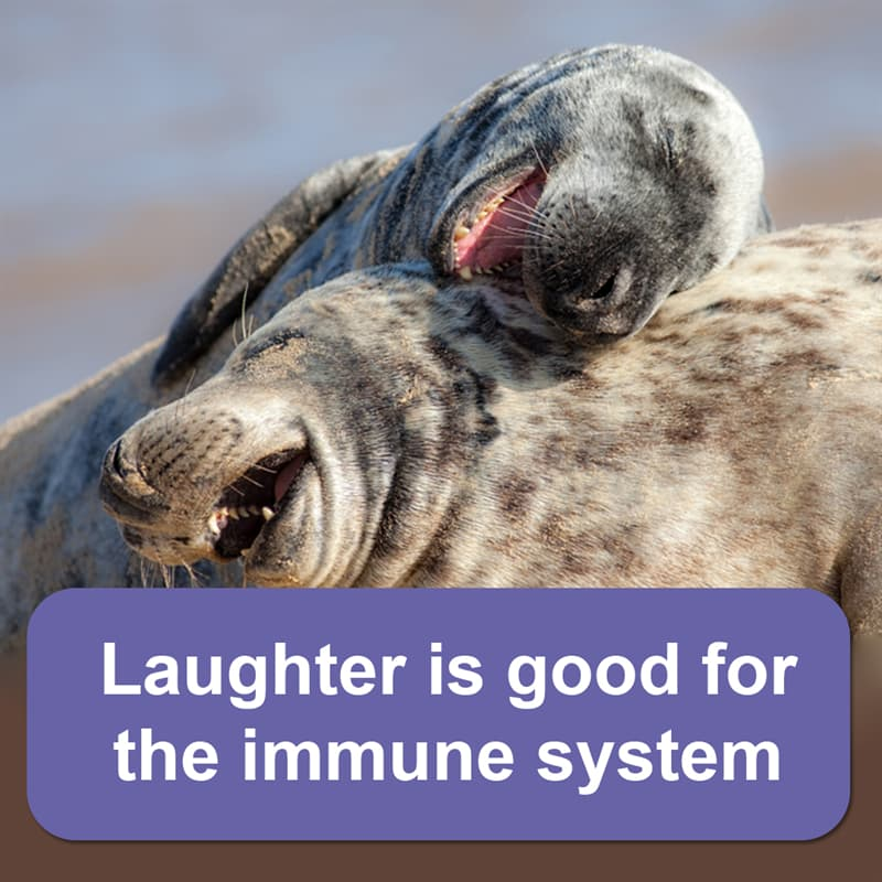 Science Story: Laughter is good for the immune system