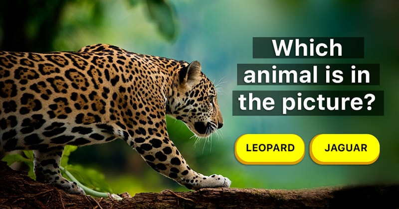Nature Story: Learn to tell the difference between 7 pairs of commonly confused animals