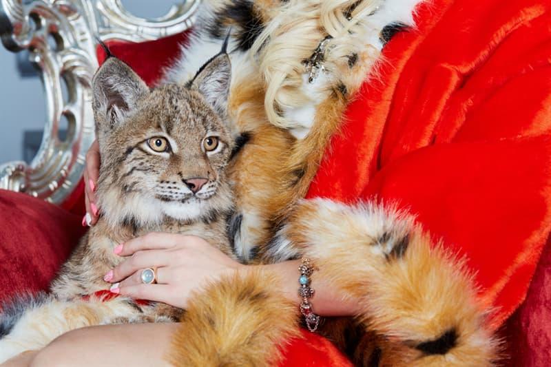 Nature Story: #6 Bobcats