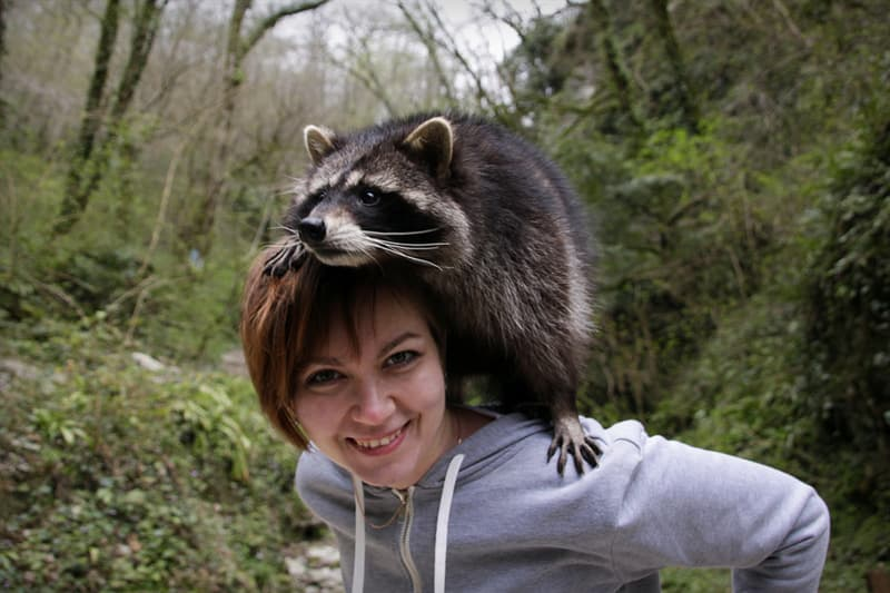 Nature Story: #7 Raccoons