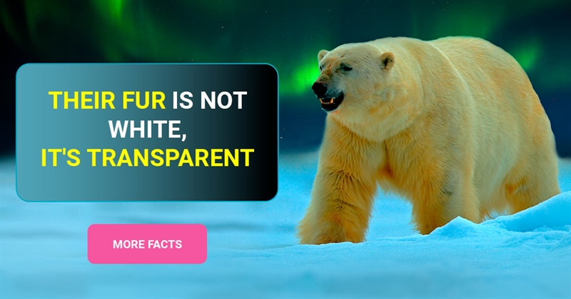 Nature Story: 7 curious polar bear facts you can't miss