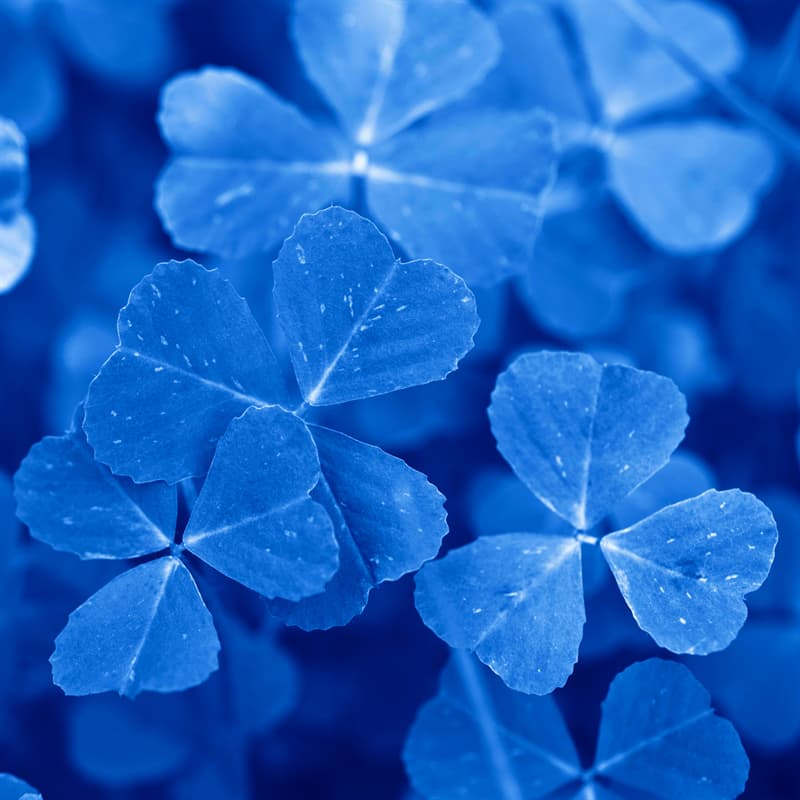 Culture Story: St. Patrick's Day decorations St. Patrick's Day history blue color