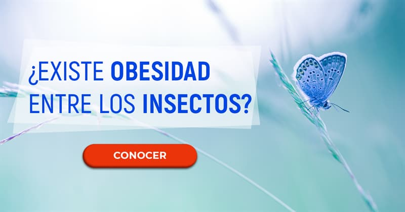 Naturaleza Historia: ¿Existe obesidad entre los insectos?