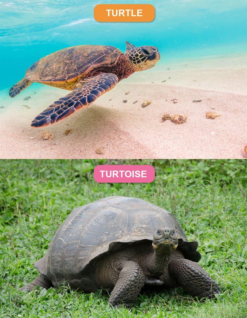 Nature Story: #1 Turtle vs. Tortoise