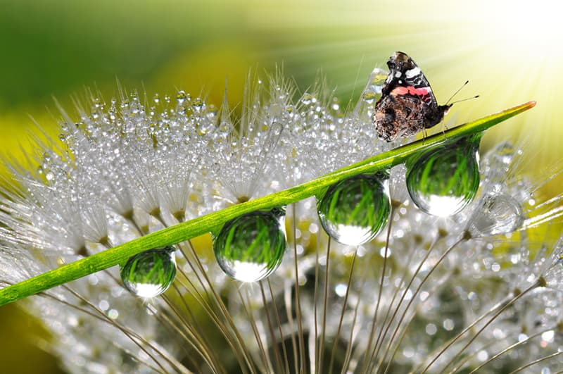 Geography Story: #5 Fantastic morning dew