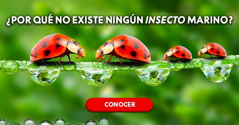 Сiencia Historia: ¿Por qué no existe ningún insecto marino?