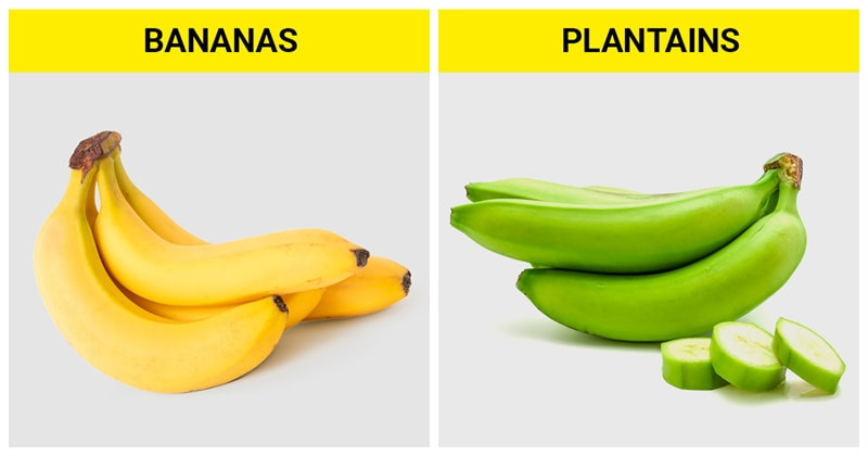 knowledge Story: The difference between bananas and plantains