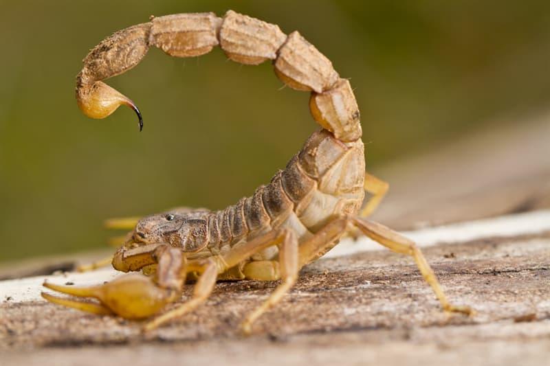 Science Story: #1 Scorpion venom - $39,000,000