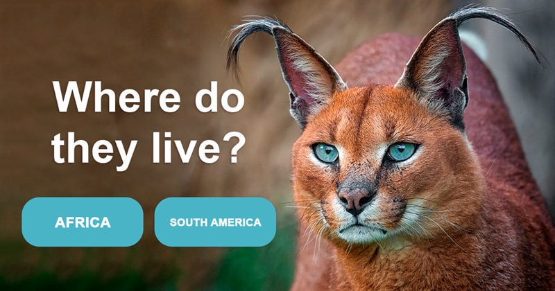 Nature Story: 5 fascinating facts about caracals