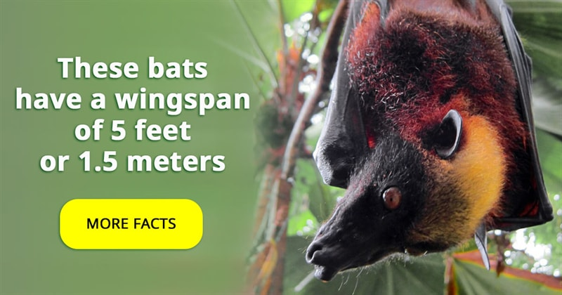 Nature Story: The largest bat in the world – 5 interesting facts