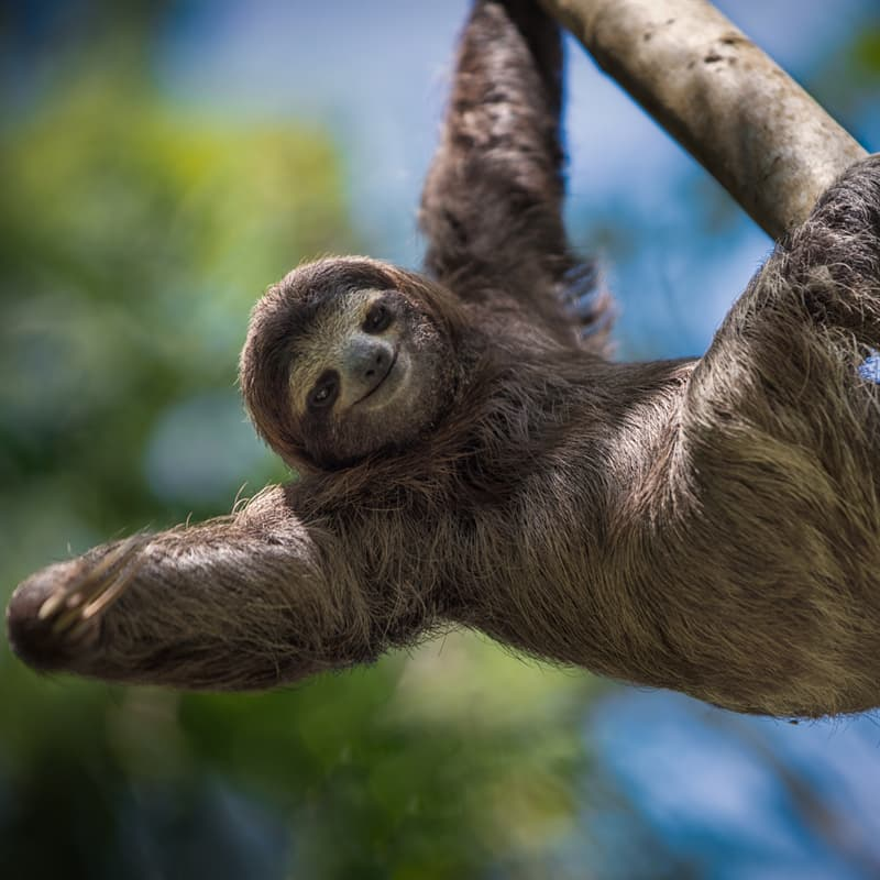 Nature Story: True facts about sloths