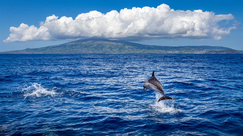 Nature Story: Faial island Azores