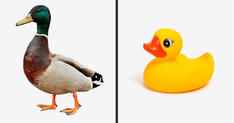 Society Story: Why rubber ducks are yellow