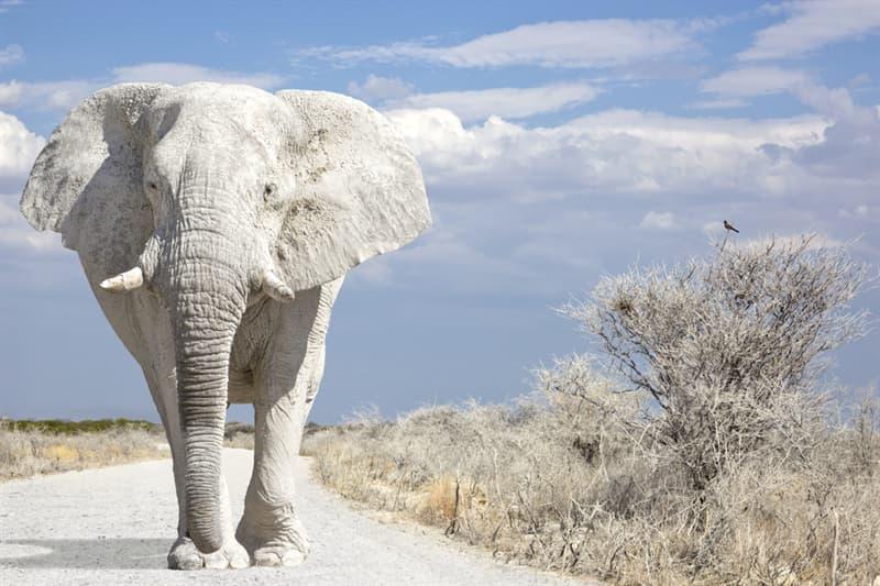 animals Story: White elephant thailand